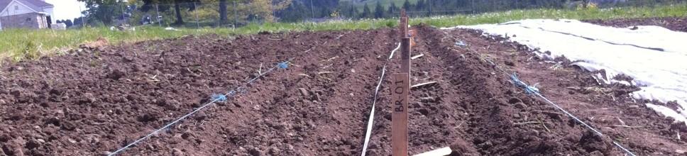 lisa beet planting