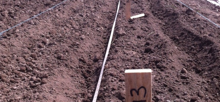 Saanich Organics Beet Sowing