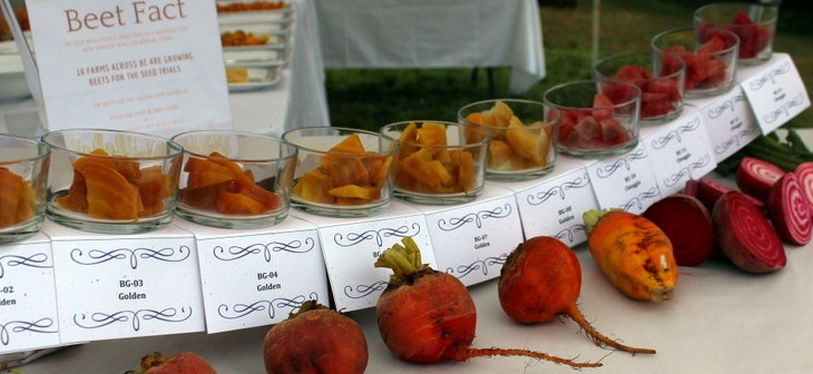 Unbeatable! Golden Beet Tasting at UBC Farm